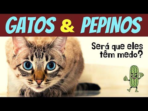 GATOS E PEPINOS – porque gatos tem medo de pepino?