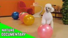 Cute Animals- Funny Cats and Dogs Videos Compilation (2020)😻🐶Raduno di cani e gatti #2