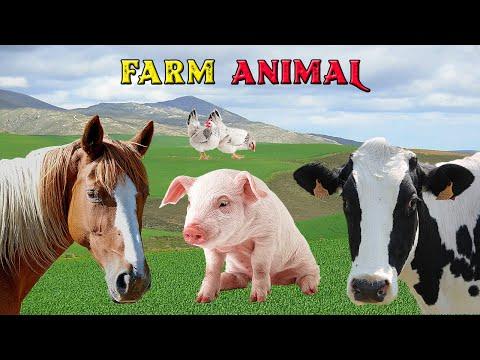 Fatos e Curiosidades Sobre Animais da Fazenda – Som dos Animais – Farm Animal