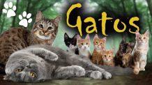 Gatos Engraçados Assustados Fofos e Brigões | Curiosidades sobre Gatos