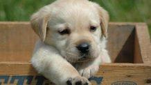 Cachorros abandonados (3min). Imagens impactantes | Animais abandonados | Pet |