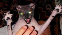 Os gatos mais perigosos do mundo! Compilação de ataques [Cat attack compilation]