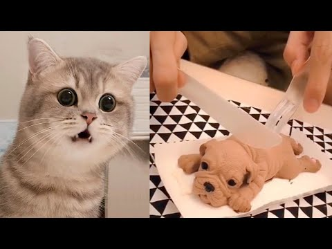Cat Reaction to Cutting Cake – Funny Dog Cake Reaction Compilation | Pets Kingdom