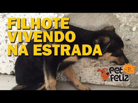 Filhotinha, vivia como cão selvagem em Rodovia, resgatada depois de ver seus irmão mortos. Petfeliz.